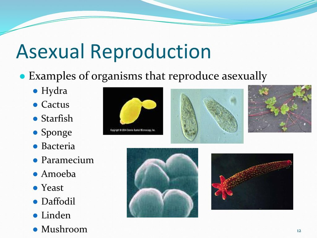 Bacteria reproduce asexually by quizlet vocabulary