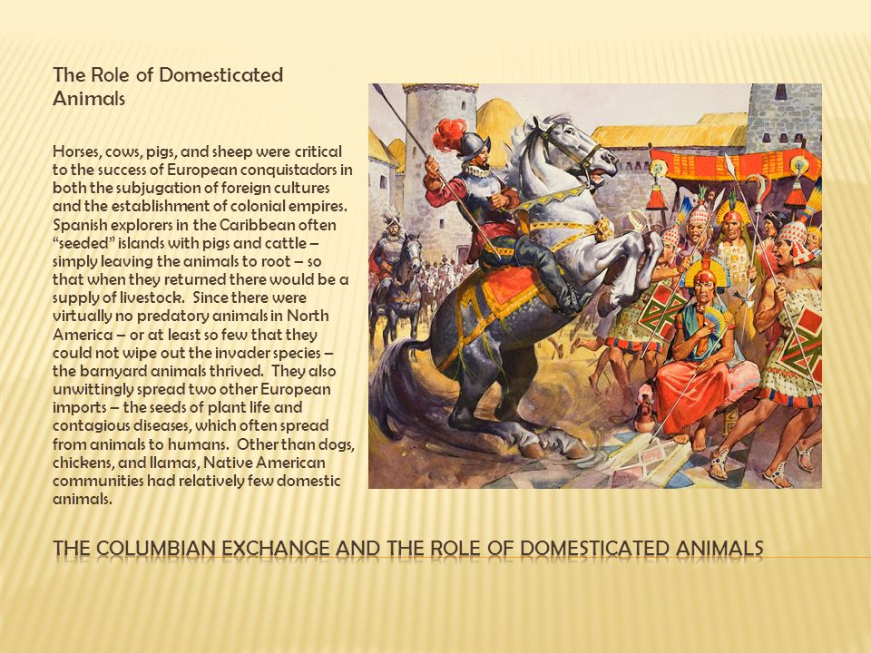 The Columbian Exchange and the role of Domesticated animals