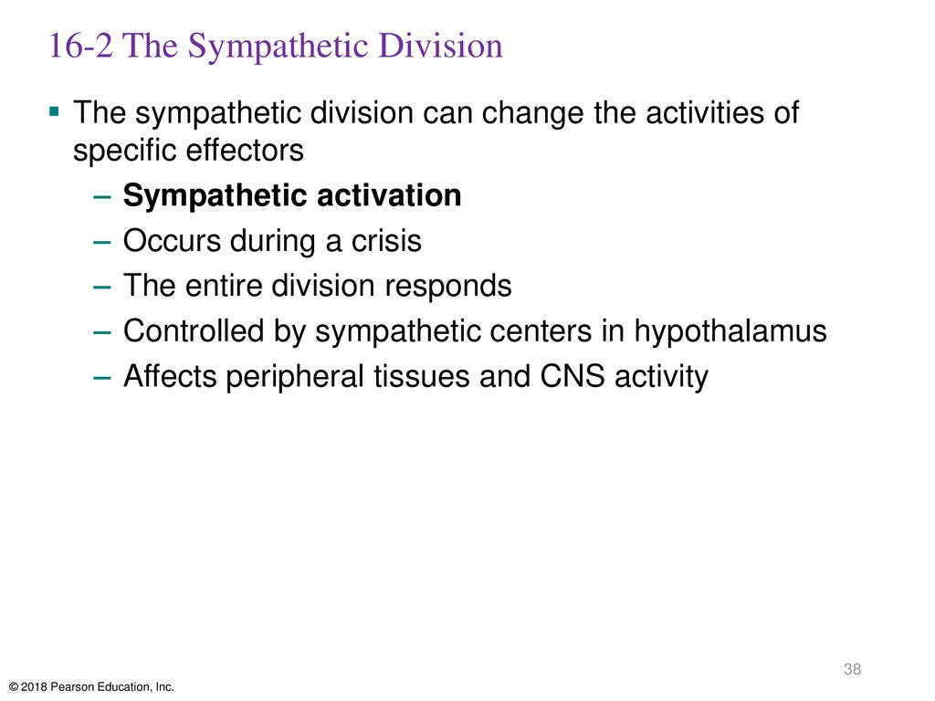 16-2 The Sympathetic Division