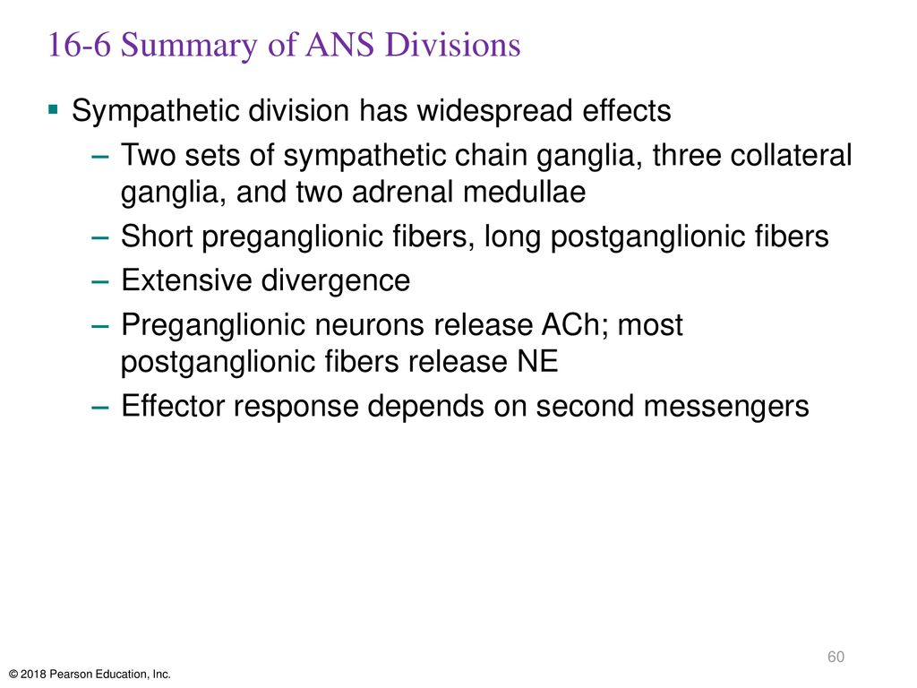 16-6 Summary of ANS Divisions