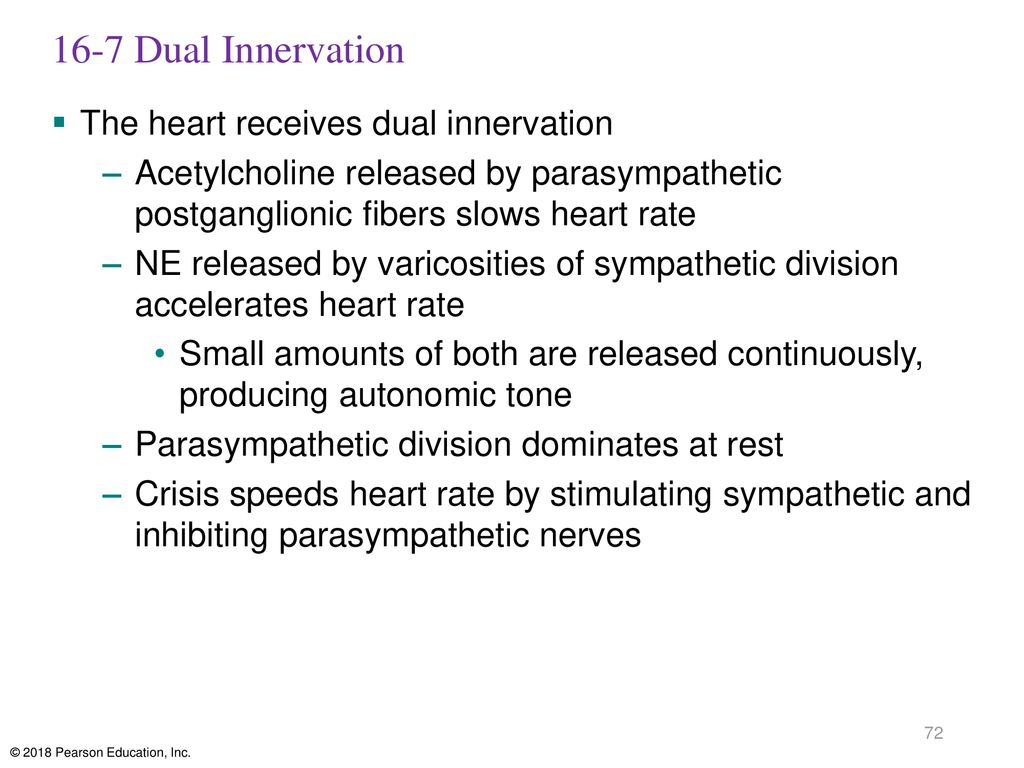 16-7 Dual Innervation The heart receives dual innervation