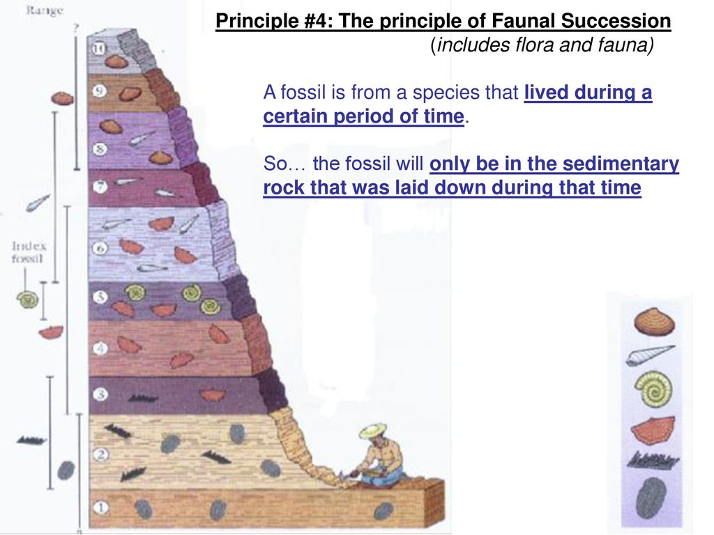 Faunal succession of principle Law of