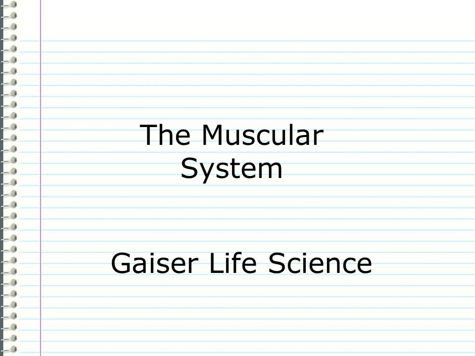 The Muscular System Gaiser Life Science