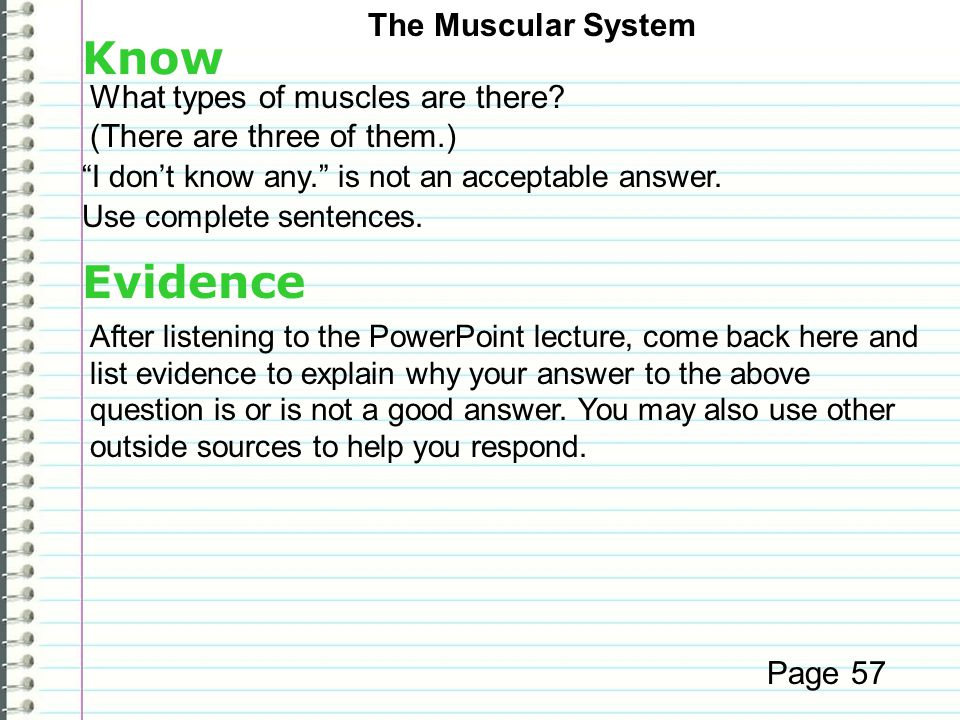 Know Evidence The Muscular System