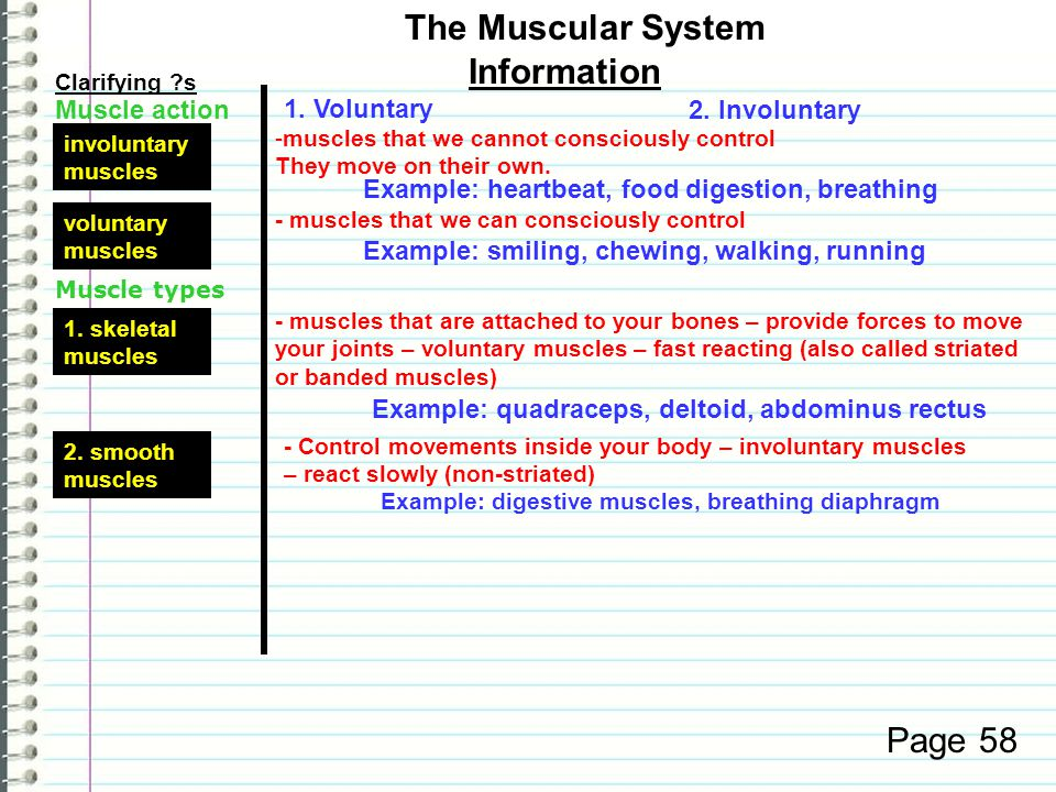 The Muscular System Information Page 58 Muscle action 1. Voluntary
