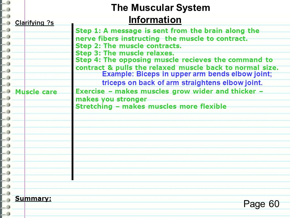 The Muscular System Information Page 60