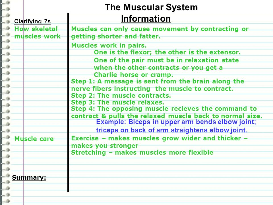 The Muscular System Information