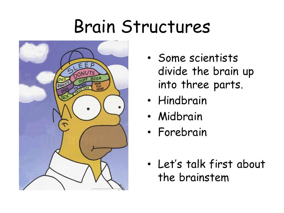 Brain Structures Some scientists divide the brain up into three parts.