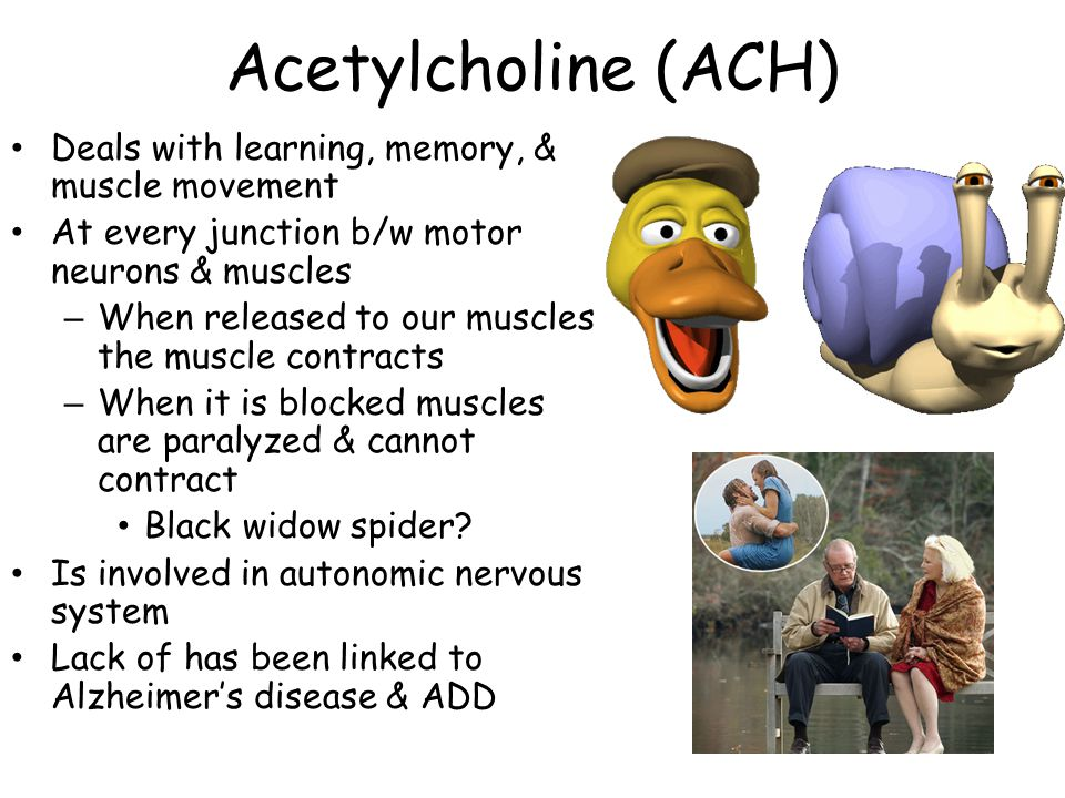 Acetylcholine (ACH) Deals with learning, memory, & muscle movement