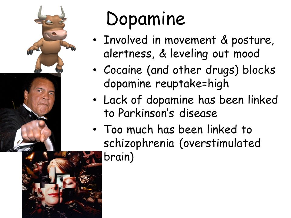 Dopamine Involved in movement & posture, alertness, & leveling out mood. Cocaine (and other drugs) blocks dopamine reuptake=high.