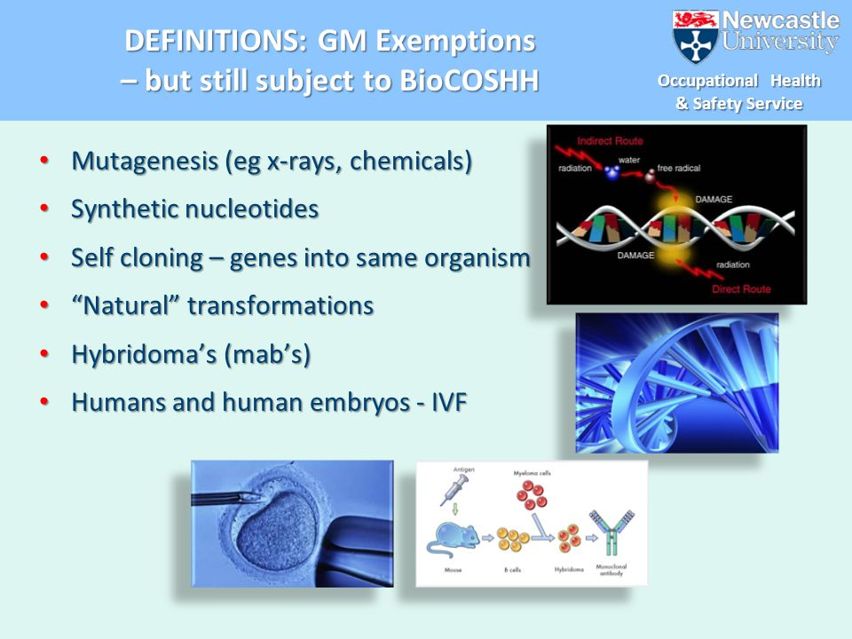 DEFINITIONS: GM Exemptions – but still subject to BioCOSHH