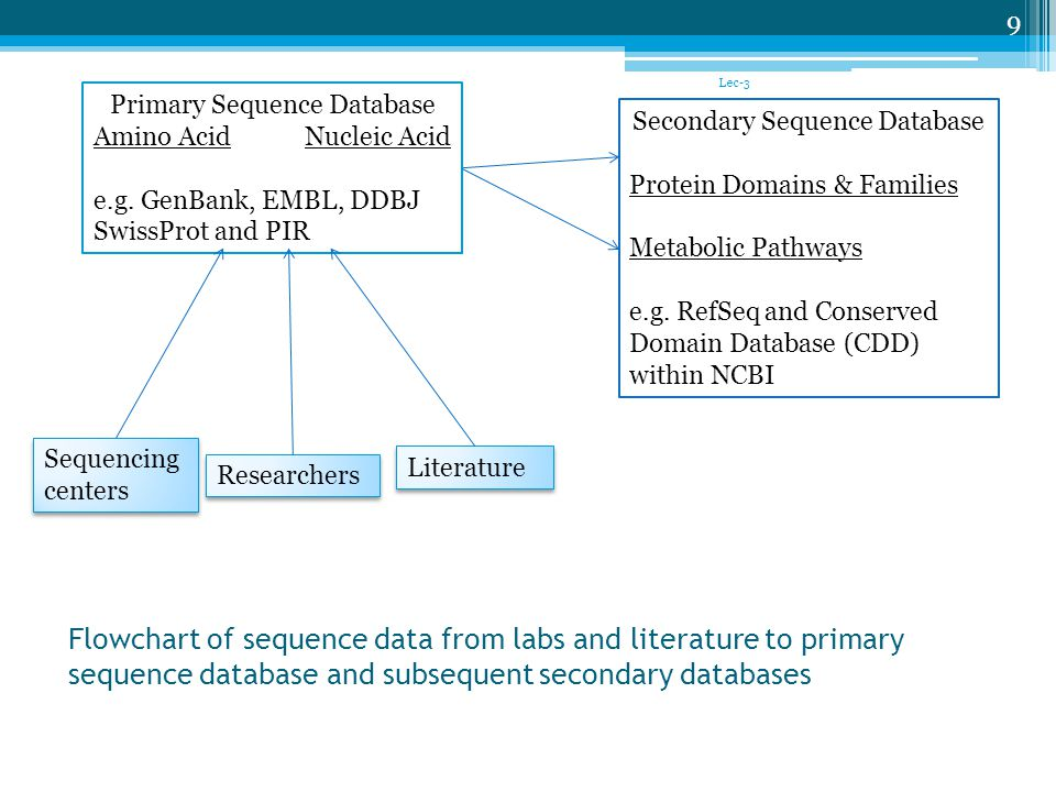 Lec-3 Primary Sequence Database. Amino Acid Nucleic Acid. e.g. GenBank, EMBL, DDBJ. SwissProt and PIR.