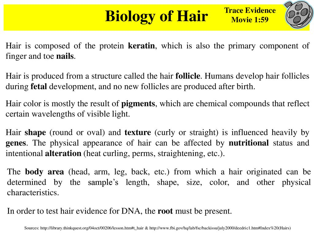 Hairs Fibers Forensic Science Hair On Trial Clip Ppt Download