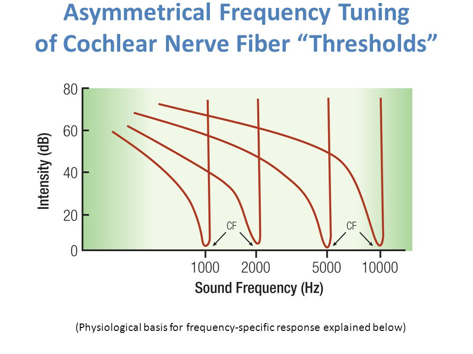Asymmetrical Frequency Tuning of Cochlear Nerve Fiber Thresholds