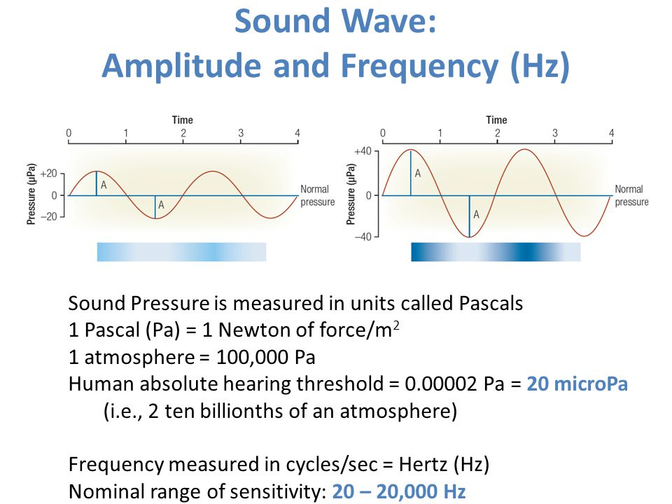 Sound Wave: Amplitude and Frequency (Hz)