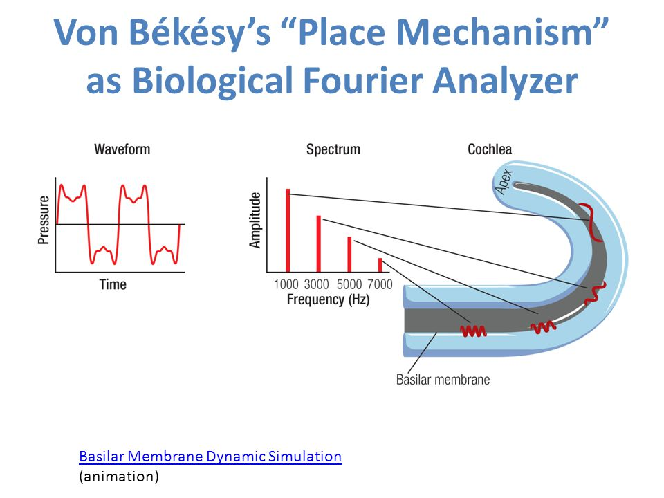 Von Békésy's Place Mechanism as Biological Fourier Analyzer