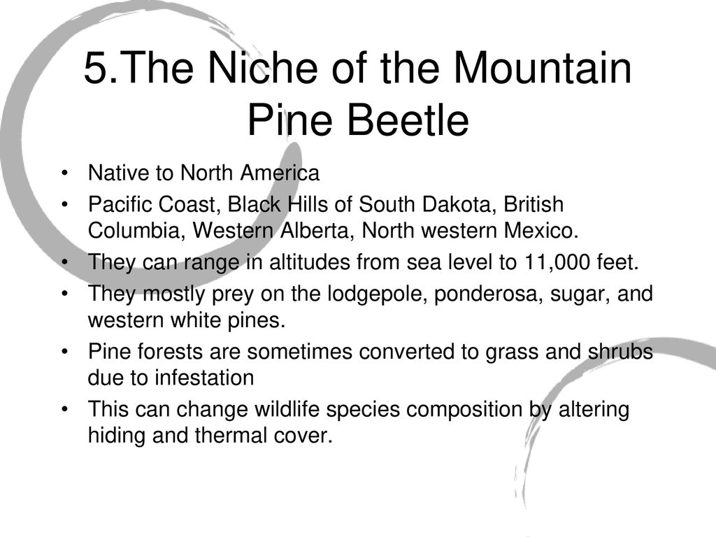 The Investigation of the Mountain Pine Beetle - ppt download