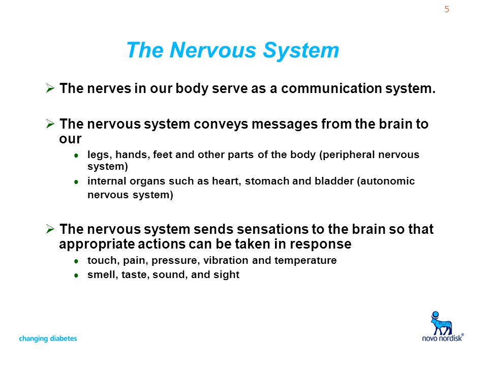 The Nervous System The nerves in our body serve as a communication system. The nervous system conveys messages from the brain to our.
