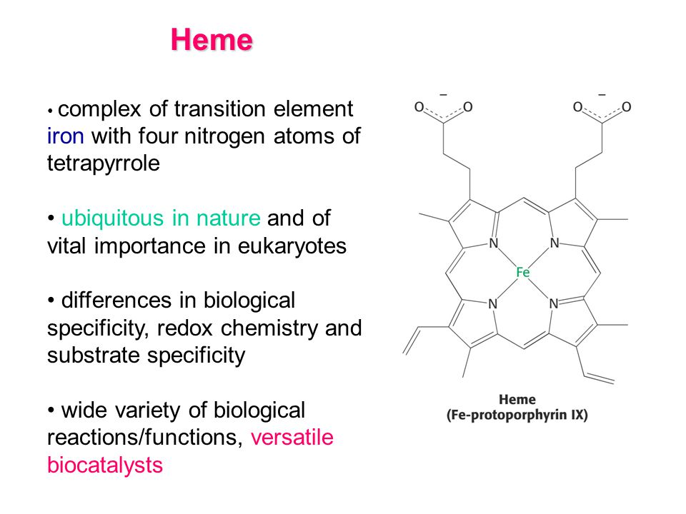 Heme ubiquitous in nature and of vital importance in eukaryotes