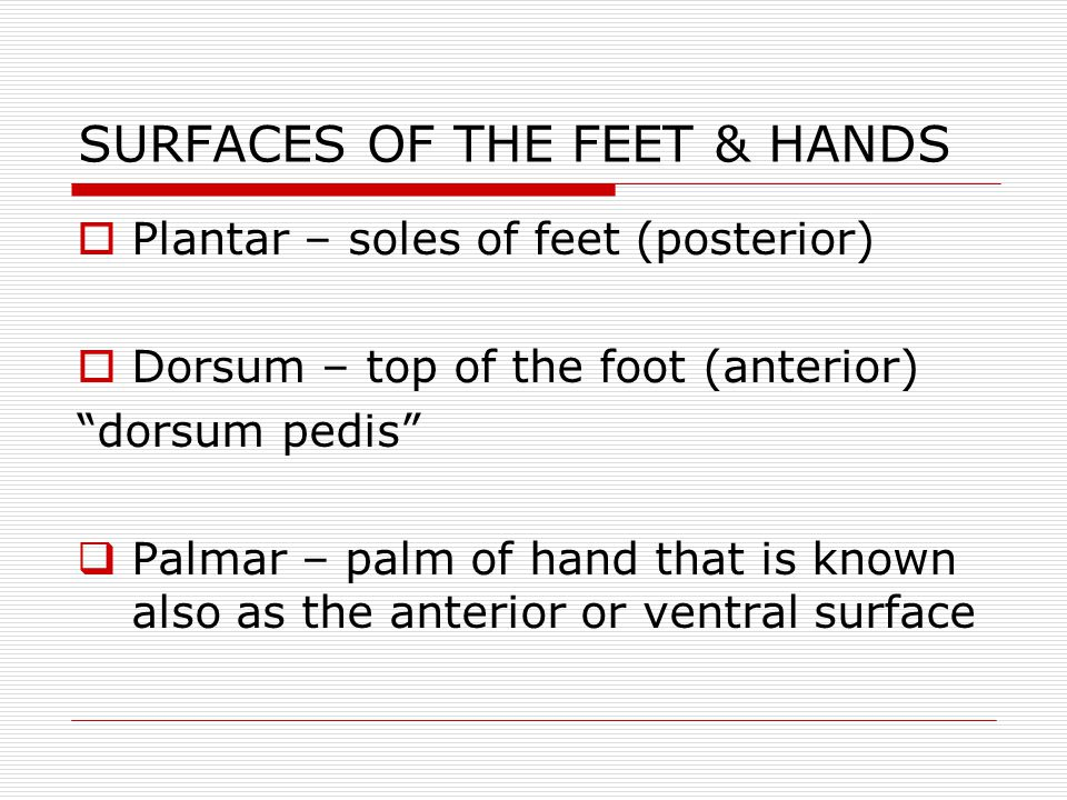 SURFACES OF THE FEET & HANDS