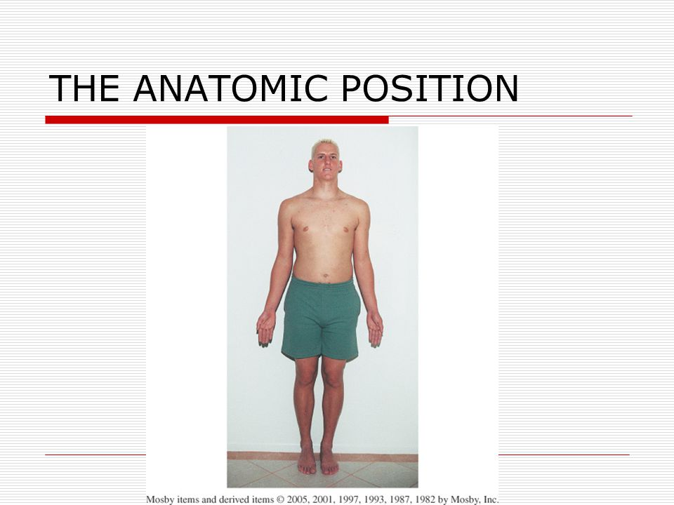 THE ANATOMIC POSITION