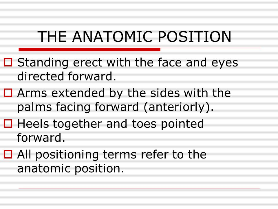 THE ANATOMIC POSITION Standing erect with the face and eyes directed forward. Arms extended by the sides with the palms facing forward (anteriorly).