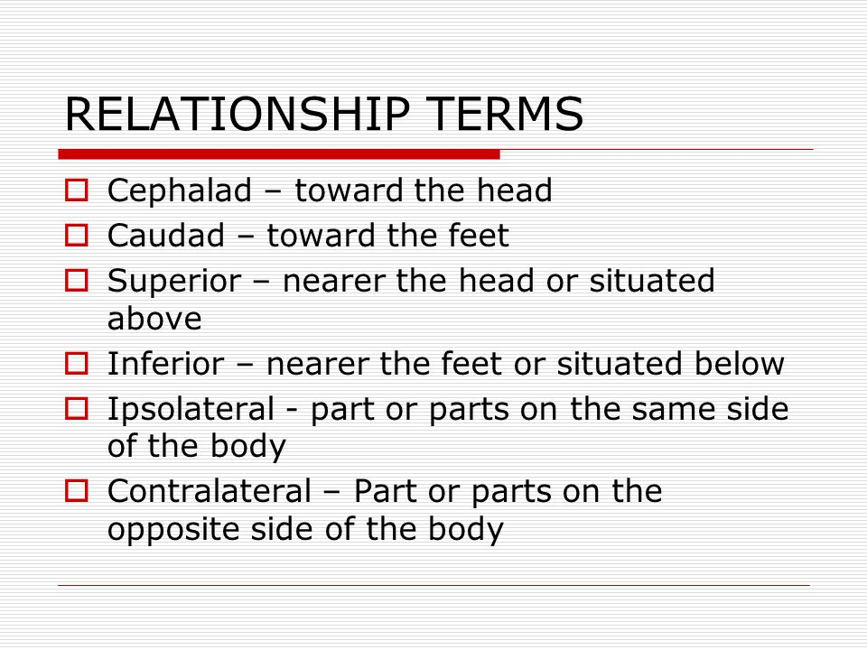 RELATIONSHIP TERMS Cephalad – toward the head Caudad – toward the feet