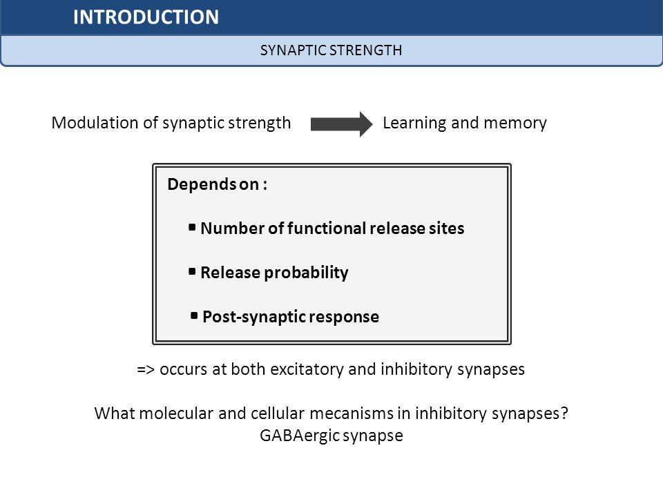 INTRODUCTION Modulation of synaptic strength Learning and memory