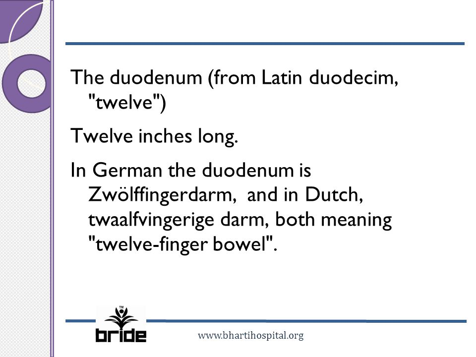 The duodenum (from Latin duodecim, twelve ) Twelve inches long