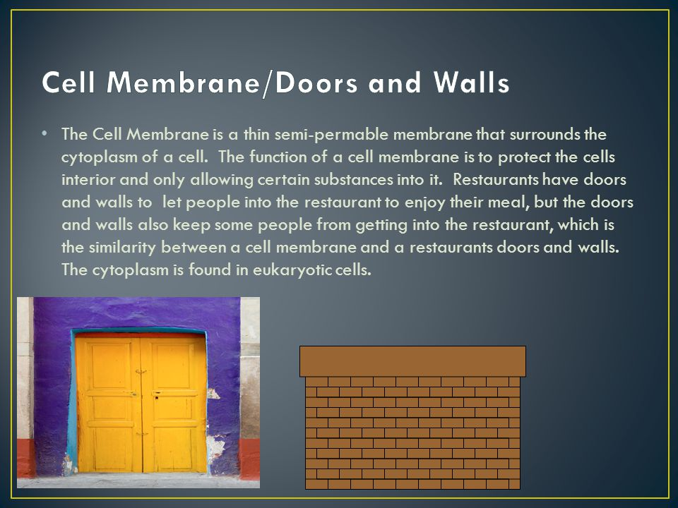 Cell Membrane/Doors and Walls
