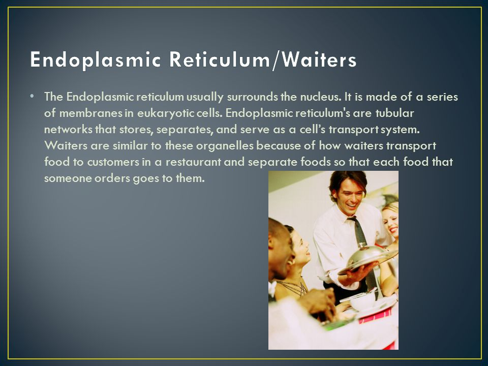 Endoplasmic Reticulum/Waiters