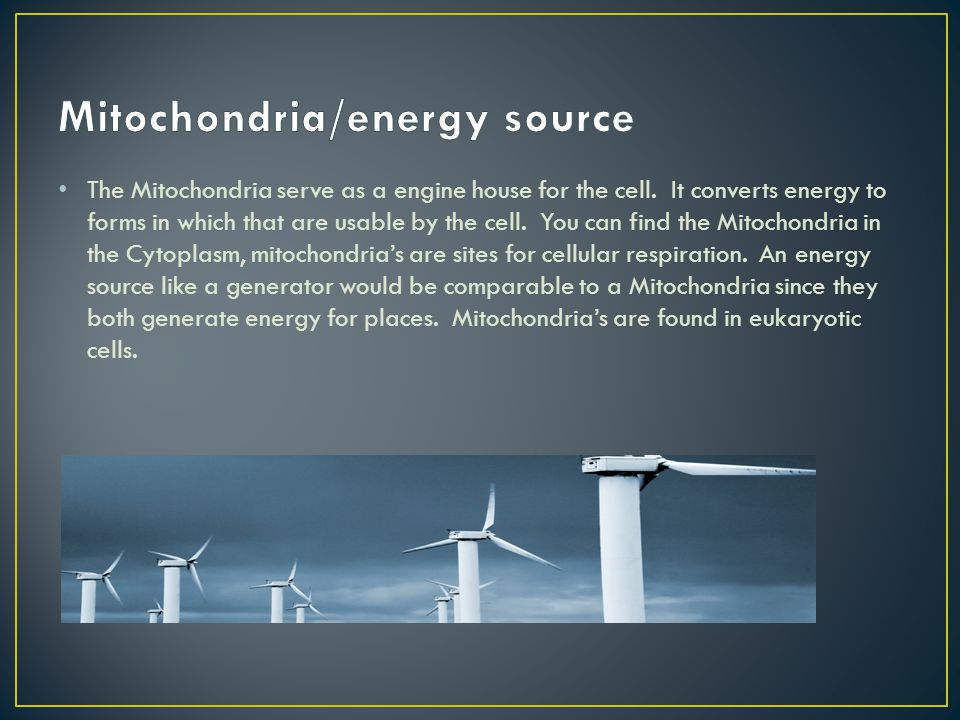 Mitochondria/energy source