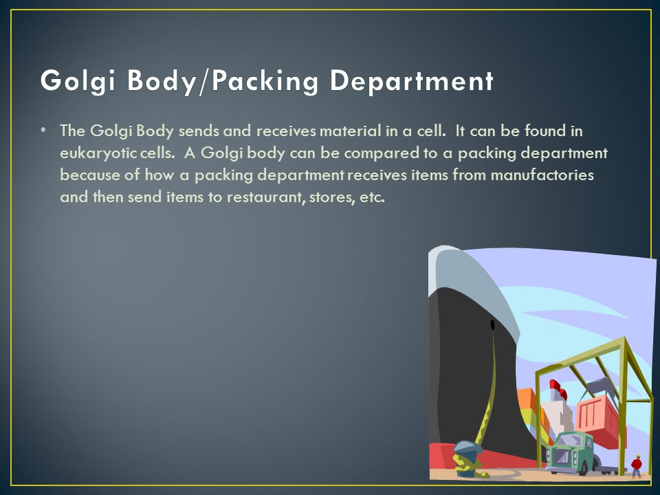 Golgi Body/Packing Department