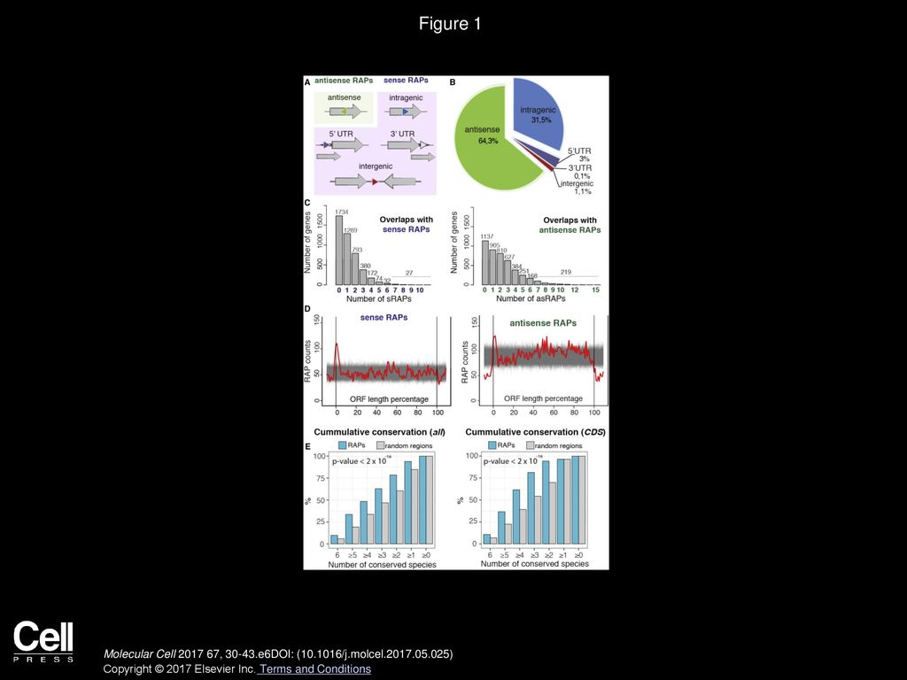 Natural RNA Polymerase Aptamers Regulate Transcription in E