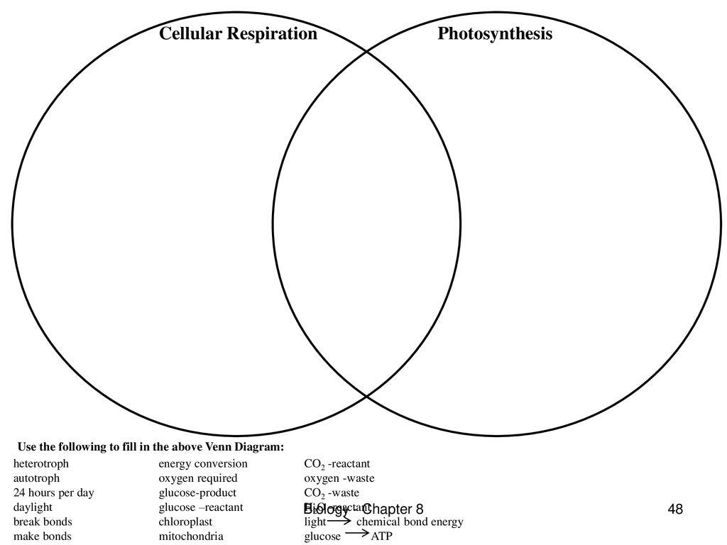 Photosynthesis Edwin P Davis M Ed Biology Chapter Ppt