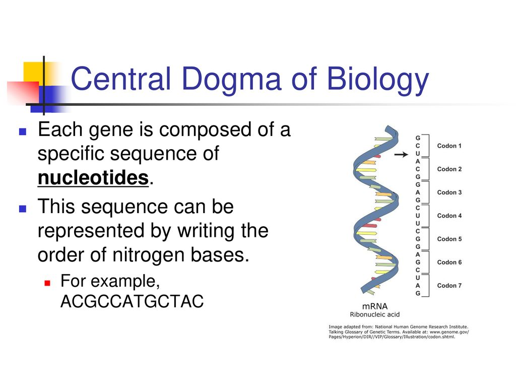 How Can Dna Be Used By The Cell To Make A Protein Ppt Download