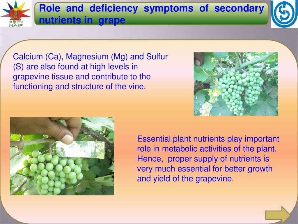 Role and deficiency symptoms of secondary nutrients in grape - ppt