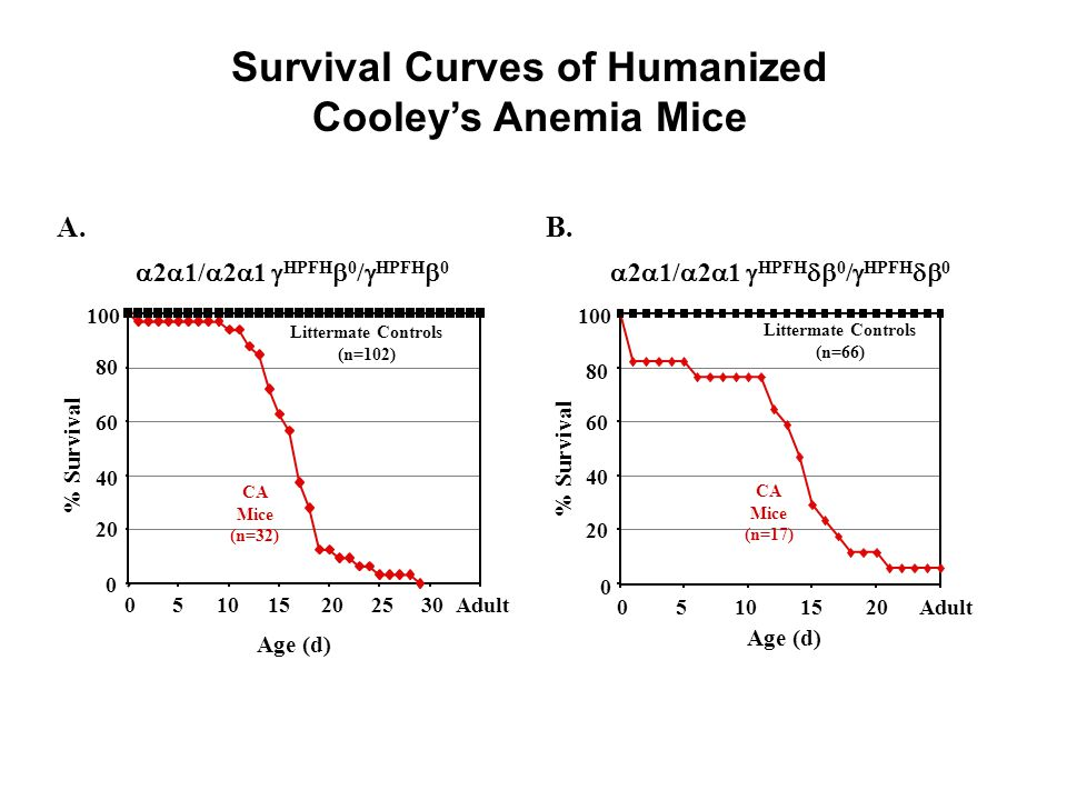 Survival Curves of Humanized