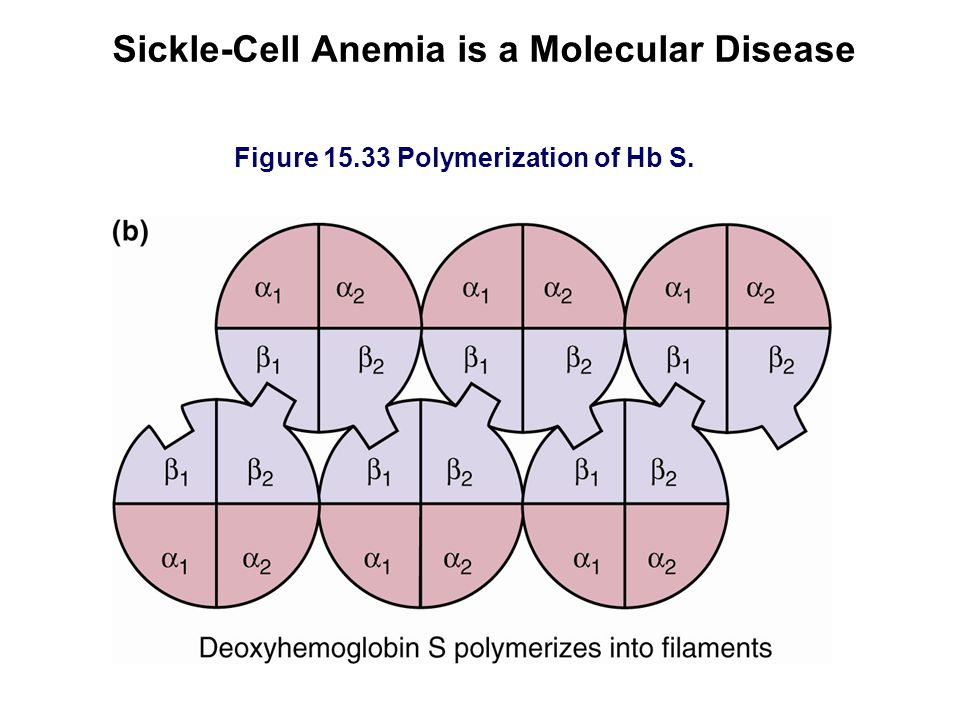 Sickle-Cell Anemia is a Molecular Disease