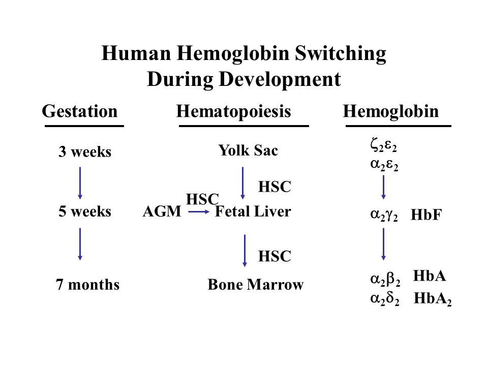 Human Hemoglobin Switching During Development