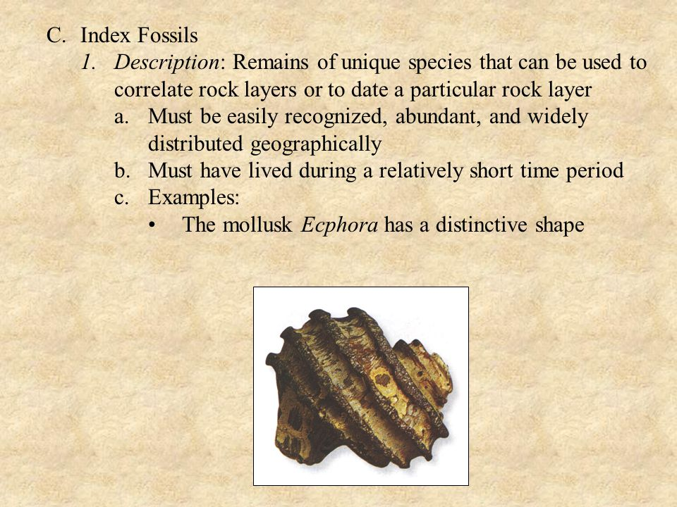 C. Index Fossils Description: Remains of unique species that can be used to correlate rock layers or to date a particular rock layer.
