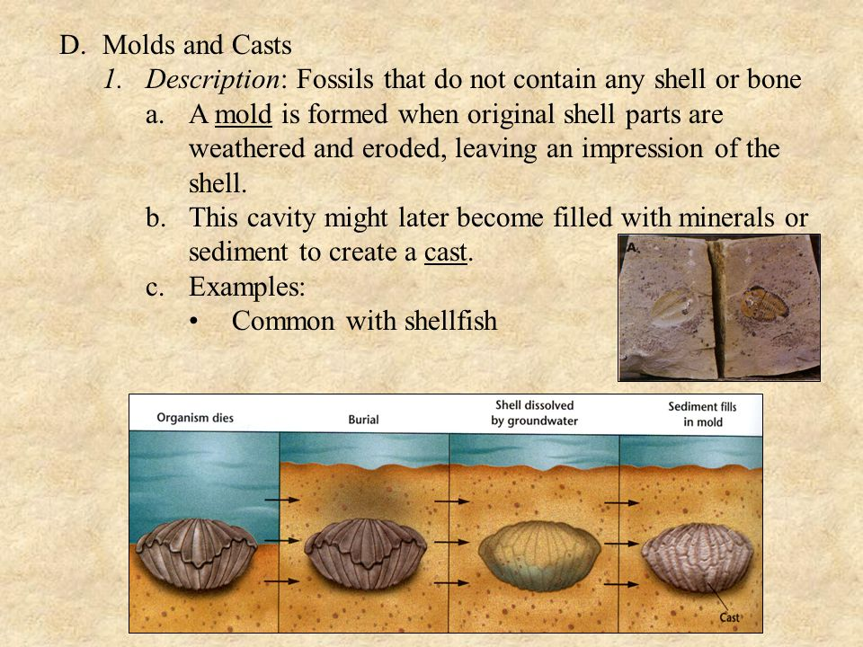 D. Molds and Casts Description: Fossils that do not contain any shell or bone.