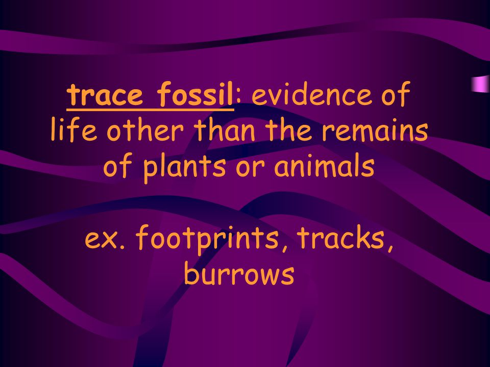 trace fossil: evidence of life other than the remains of plants or animals ex.