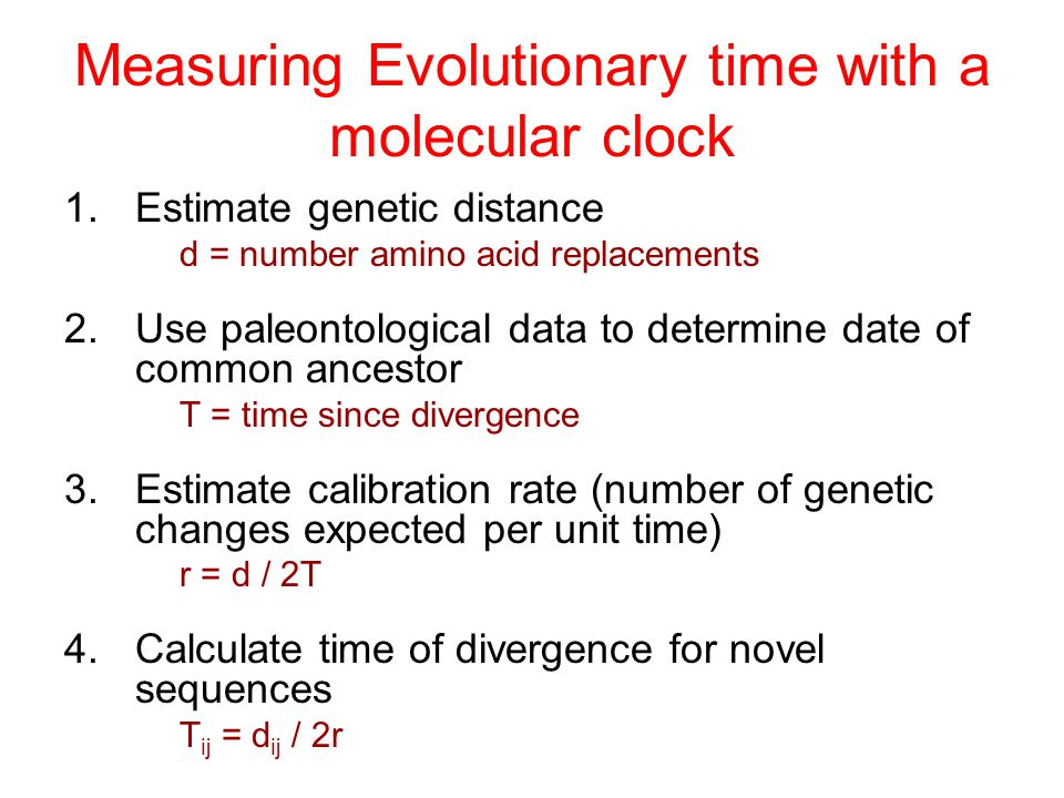 Measuring Evolutionary time with a molecular clock