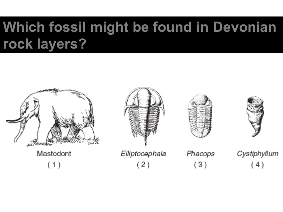 Which fossil might be found in Devonian rock layers