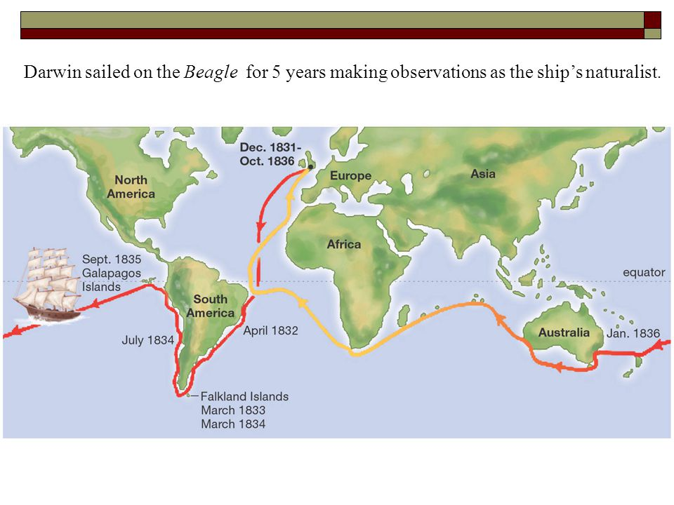 Darwin sailed on the Beagle for 5 years making observations as the ship's naturalist.