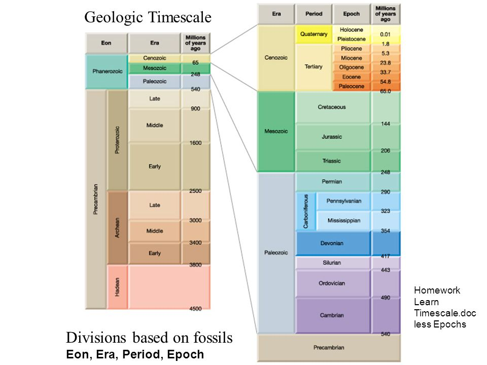 Divisions based on fossils