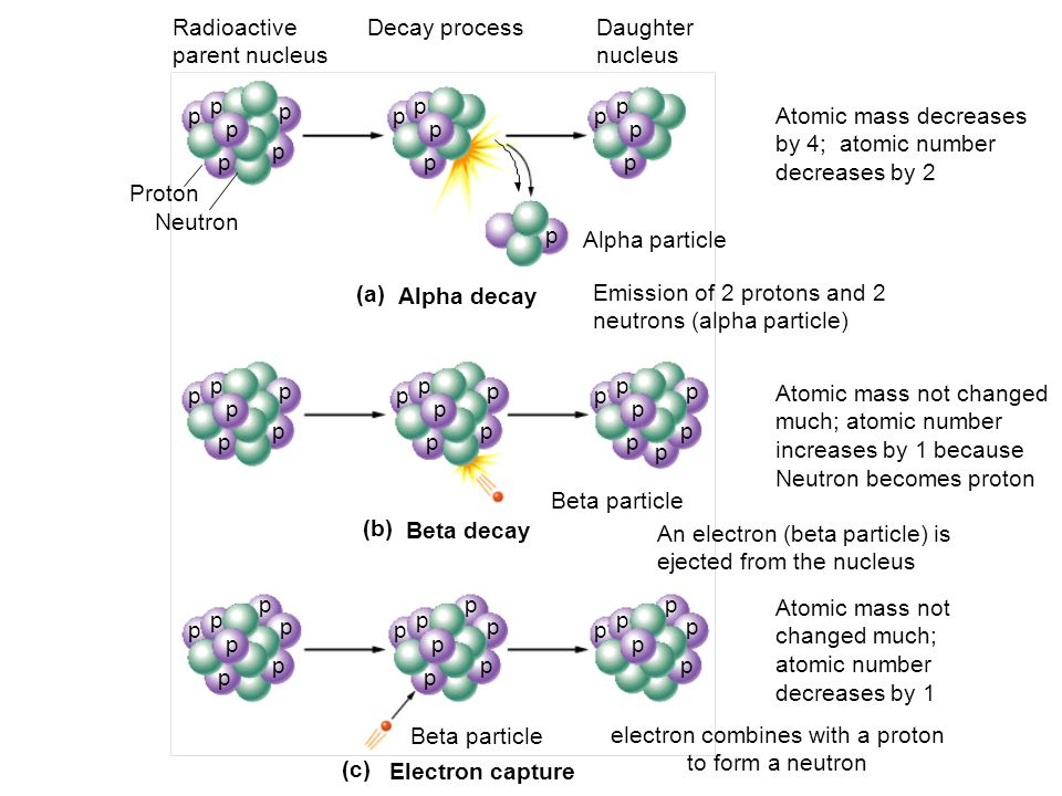electron combines with a proton to form a neutron
