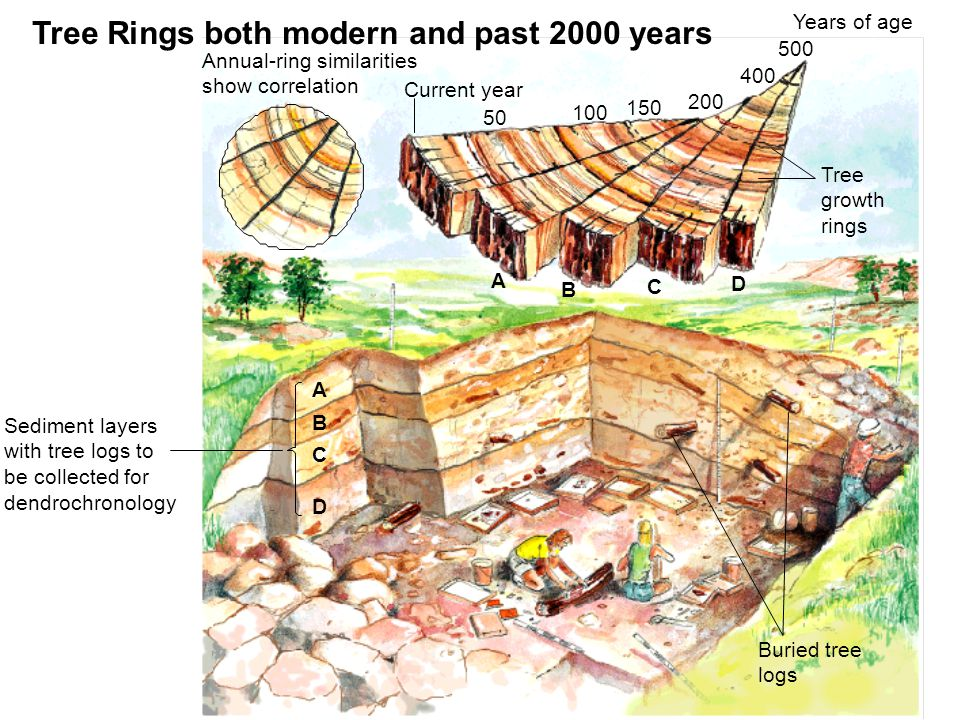 Tree Rings both modern and past 2000 years