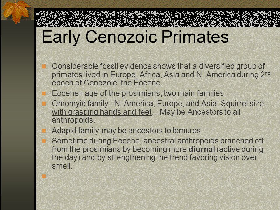 Early Cenozoic Primates